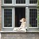 Dog In Window - PhotoDune Item for Sale
