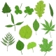 Vector Set of Cartoon Green Tree Leaves - GraphicRiver Item for Sale
