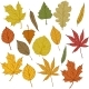 Vector Set of Cartoon Autumn Tree Leaves - GraphicRiver Item for Sale