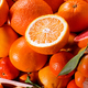 Close up on an assortment of fresh citrus fruit - PhotoDune Item for Sale