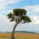 Landscape with nobody tree in Africa - PhotoDune Item for Sale