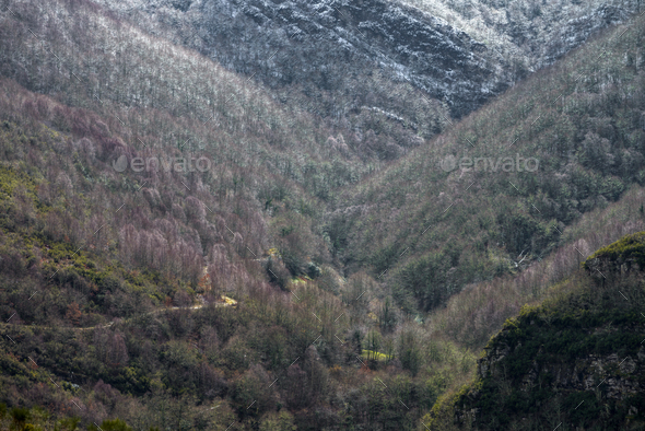 Mountain road through the winter forest - Stock Photo - Images