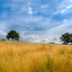 Summer aspect of the Galician countryside - PhotoDune Item for Sale