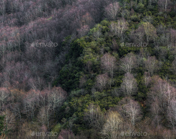 Mixed deciduous and perennial forest - Stock Photo - Images