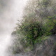Trees between the mist on a cliff - PhotoDune Item for Sale