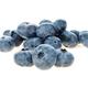 Blueberry isolated on white background. - PhotoDune Item for Sale