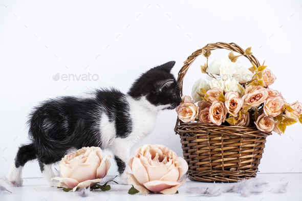 Kitten in basket - Stock Photo - Images