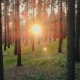 Summer Forest Trees Woods at Sunset Sun Shining Through - VideoHive Item for Sale
