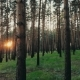 Summer Forest Trees Woods at Sunset Sun Shining Through Trees Nature Beauty - VideoHive Item for Sale