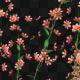 Orange Flower Growing - VideoHive Item for Sale