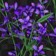 Purple Flowers Growing - VideoHive Item for Sale