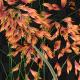 Growing Orange Flowers - VideoHive Item for Sale