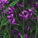 Pink Flowers - VideoHive Item for Sale