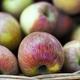 Apples on a basket - PhotoDune Item for Sale