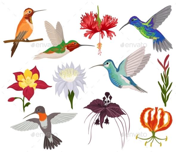 hummingbird vectors by vectoristik graphicriver