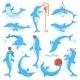 Dolphin Vectors