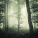 Enchanted dark woods with mist - PhotoDune Item for Sale
