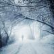 Man walking in snowy winter wonderland forest - PhotoDune Item for Sale