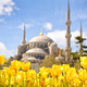 Blue Mosque and Tulip Festival - PhotoDune Item for Sale