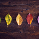 Collection of autumn leaves symbolizing the four seasons on a wooden background. Table top view - PhotoDune Item for Sale