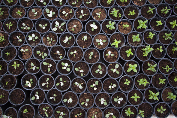 Seedling in greenhouse - Stock Photo - Images