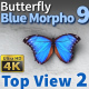 Butterfly Blue Morpho 9 - VideoHive Item for Sale