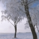 Trees With Snow White And Glittering Frost On Branches In Winter After Snowfall - VideoHive Item for Sale