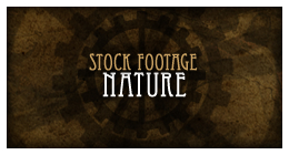 Stock Footage - Nature