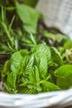Herbs - PhotoDune Item for Sale