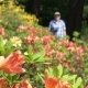 A Man Strolls Along the Flowers of the Rhododendron - VideoHive Item for Sale