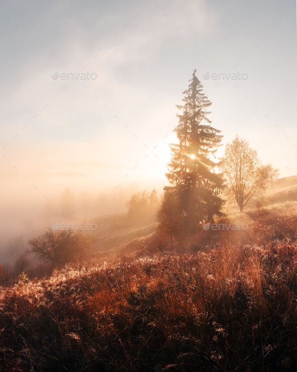 Amazing scene on autumn mountains - Stock Photo - Images