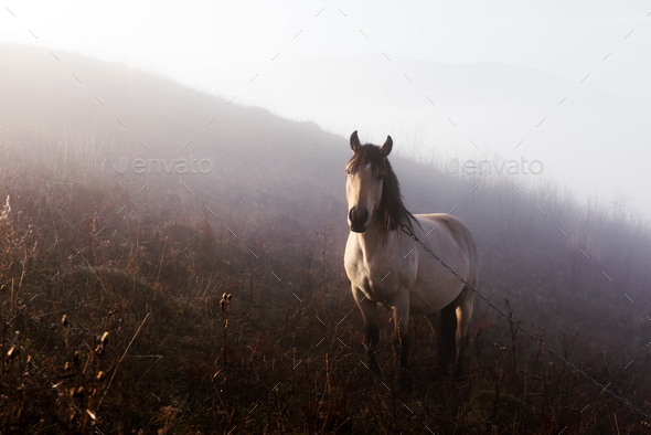 Horse in foggy meadow in mountains valley - Stock Photo - Images