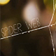 Spider Web - VideoHive Item for Sale