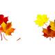 Banner with Colorful Autumn Maple Leaves - GraphicRiver Item for Sale