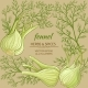 Fennel Vector Frame - GraphicRiver Item for Sale
