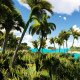 Palm Trees Islands - VideoHive Item for Sale