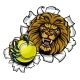 Lion Holding Tennis Ball Breaking Background