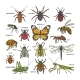 Insect Vectors - GraphicRiver Item for Sale