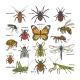 Insect Vectors