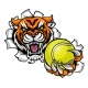Tiger Holding Tennis Ball Breaking Background