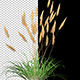 Ornamental Garden Plant - VideoHive Item for Sale
