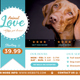 Animal Care Flyer (11x8.5 and 6x4) - GraphicRiver Item for Sale