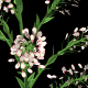 Growing White Flower - VideoHive Item for Sale