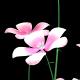 Pink Petunia - VideoHive Item for Sale