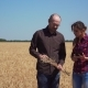 Two Partners Shake Hands After Discussing Near Wheat Crops with Ears in Their Hands - VideoHive Item for Sale