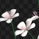 White Petunia - VideoHive Item for Sale