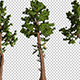 3 Kinds Of Coniferous Trees - VideoHive Item for Sale