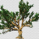 Large Branchy Tree - VideoHive Item for Sale