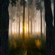 Morning In Pine Forest - VideoHive Item for Sale