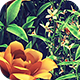 Flower Field Loop - VideoHive Item for Sale